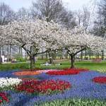 Парк Кекенхоф – «тюльпан» Голландии