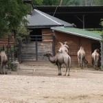 Пражский зоопарк — крупнейший зоопарк центральной Европы