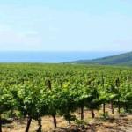 Винный туризм в Болгарии