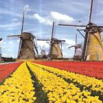 Сельское хозяйство и климат Нидерландов